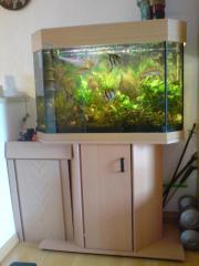 Verkaufe komplettes Aquarium