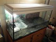 Verkaufe Wasserschildkröten Aquarium