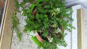 Vier Winterharte Pflanzen