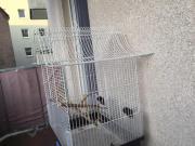 Vogel Käfig