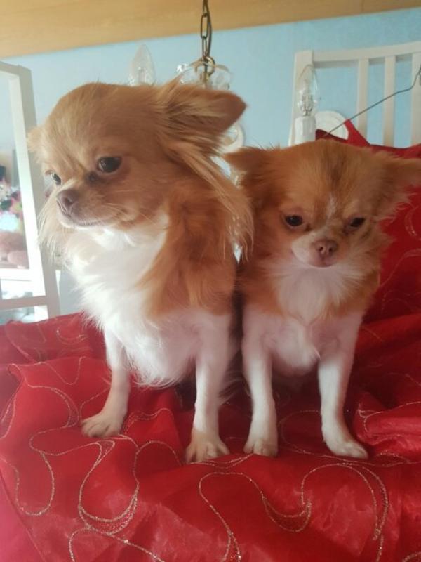 W Ndersch Ne Liebhaber H Ndin In F Rth Hunde Kaufen