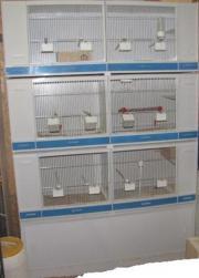 zuchtboxen tiermarkt gebraucht kaufen oder kostenlos verkaufen kleinanzeigen bei quoka. Black Bedroom Furniture Sets. Home Design Ideas