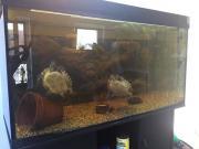 Zwei Wasserschildkröten in