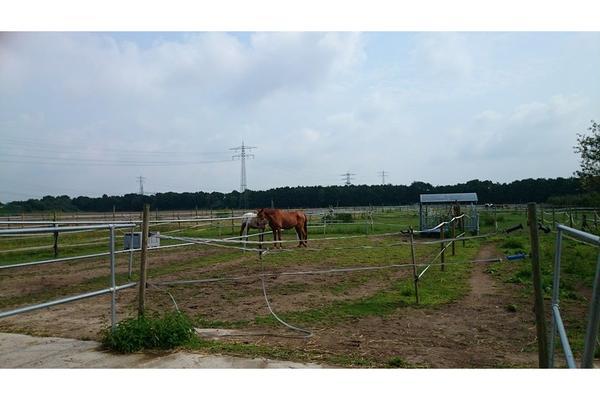 2 Pferdeboxe zu vermieten
