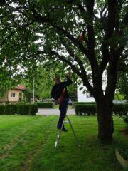 2018: Baumfällungen, Baumrückschnitt