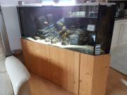 500 lt Aquariumbecken