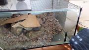 Aquarium 100 x