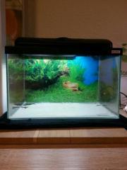 Aquarium 25 Liter