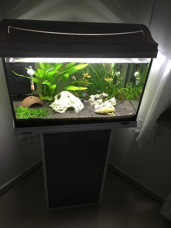 60l aquarium neu und gebraucht kaufen bei for Aquarium gebraucht