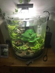 Aquarium mit Bio