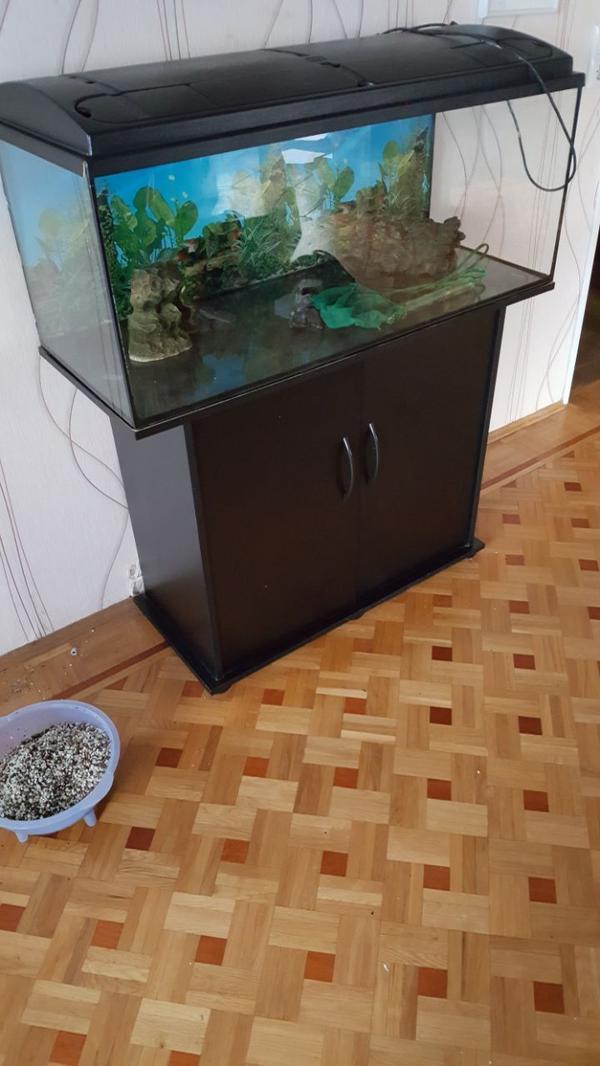 leer kleinanzeigen aquaristik kaufen verkaufen bei deinetierwelt. Black Bedroom Furniture Sets. Home Design Ideas