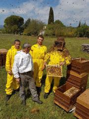 Bienenköniginnen kaufen