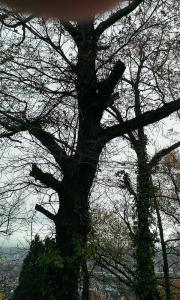 Brennholz (1 Baum)