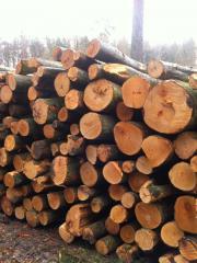 Brennholz Buche für