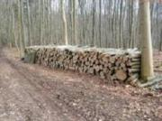 Brennholz Buche und