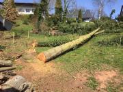 Brennholz Nadelbäume