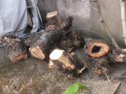Brennholz/Pappelbaumstämme