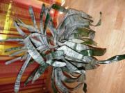 Bromelie - Lanzenrosette Aechmea fasciata