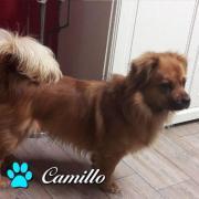 Camillo möchte endlich