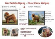 Chow Chow Welpen