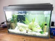 Fisch Aquarium, 60
