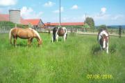 Freie Pferdeboxen in