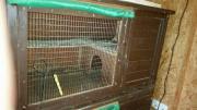 Hasen/Meerschweinchen Stall