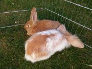 Hübche Kaninchen