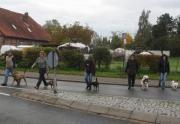 Hundeführerschein-Vorbereitungskurs