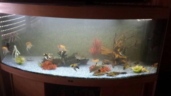 450l aquarium neu und gebraucht kaufen bei for Aquarium gebraucht