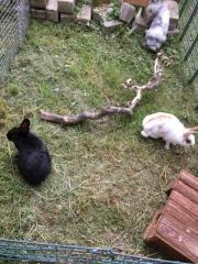 Kaninchen suchen ein