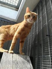 Kater Garfield sucht ein Zuhause