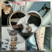Katzen Pflegestelle
