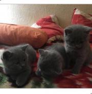 Katzenbabys  3 Kater
