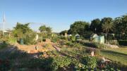Kleingarten zu verpachten