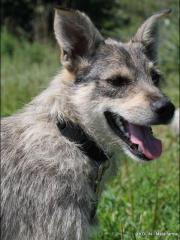 KOLIN, Terrier Mischling -