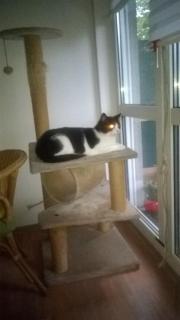 Liebevolle Katzen-Einzelbetreuung
