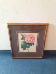 Lithographie Rose im Rahmen hinter