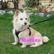 Matilda sucht DICH!