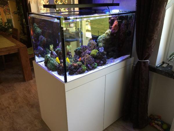 meerwasser aquarium raumteiler 500 liter komplett in dortmund fische aquaristik kaufen und. Black Bedroom Furniture Sets. Home Design Ideas