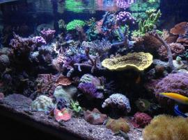 Meerwasseraquaristik Besuchen Sie unseren Onlineshop: Kleinanzeigen aus Eckental - Rubrik Fische, Aquaristik