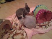 Missy & Bobby, 2 &
