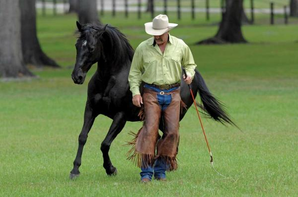 natural horsemanship kommunikationstraining jungpferde problempferde in bremen pferdeboxen. Black Bedroom Furniture Sets. Home Design Ideas