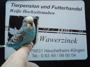 Offene Vogelbörse in