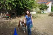 Pony- Schein