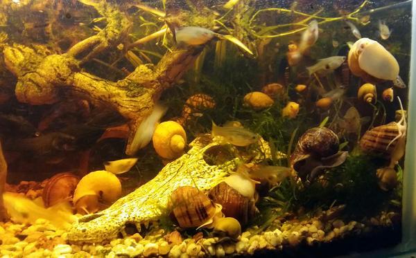 aquaristik in bernau bei berlin kaufen bei deinetierwelt. Black Bedroom Furniture Sets. Home Design Ideas
