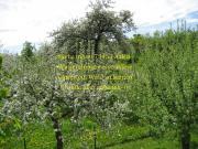 Suche Garten-Grundstück,