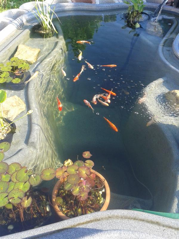 Teich mit fische ansbach aquaristik deine for Teich fische ohne filter