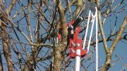 Teleskop Baumschere zu
