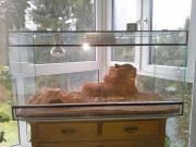 Terrarium Glas für